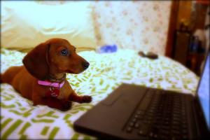 Arriva il veterinario Online 24ore su 24: Visite in web cam