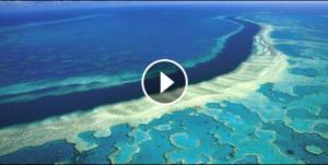 Cosa sta succedendo alla barriera corallina?