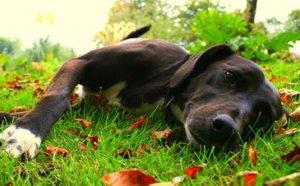 Vietato lasciare il cane da solo in giardino. 'E' reato'