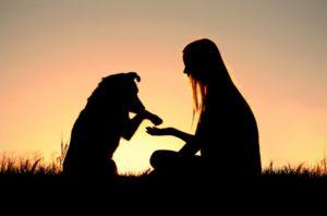 I cani ci capiscono: Lo dimostra una nuova ricerca scientifica