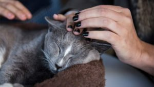Studiosi: Accarezzare e baciare i gatti è rischioso