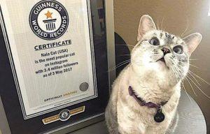 Nala è il gatto più popolare di Instagram. Certificato dal Guinness dei primati