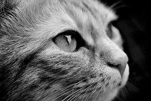 Perché i gatti ci migliorano la vita?