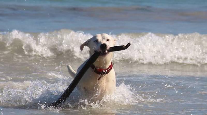Cani in spiaggia. Il Tar: 'I Comuni non possono vietare l'accesso'