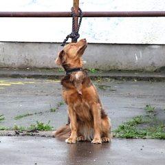 Primo ponte estivo del 2019. Abbandonati già più di 360 cani in strada